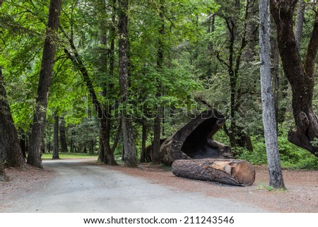 Forest area in a California Redwood trees areas, Leggett - stock photo
