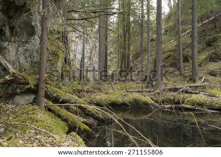 Forest area in sweden with pines, high rocks and water - stock photo