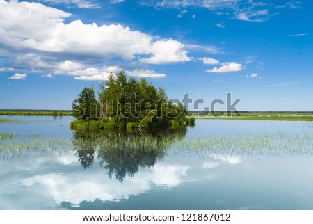 Forest Around On a Clear Day - stock photo
