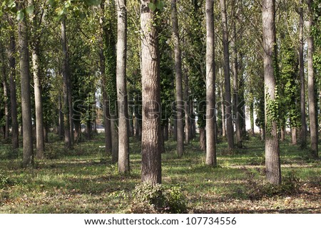 Forest as a background - stock photo