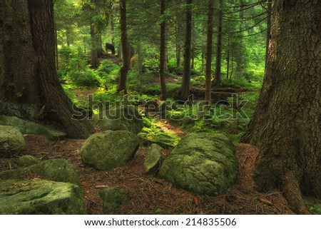 Forest as a background. Natural landscape - stock photo