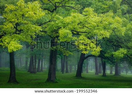 Forest at the Swallow Cliff Woods in Palos Park, Illinois - stock photo