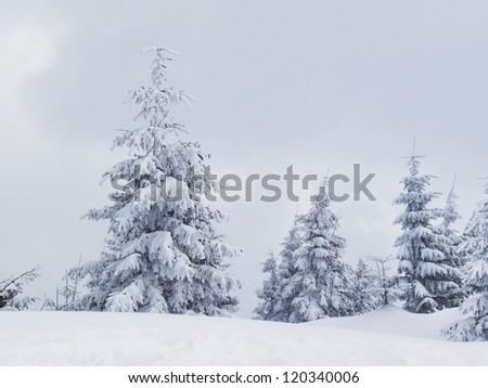 Forest at the winter time. Natural winter landscape - stock photo