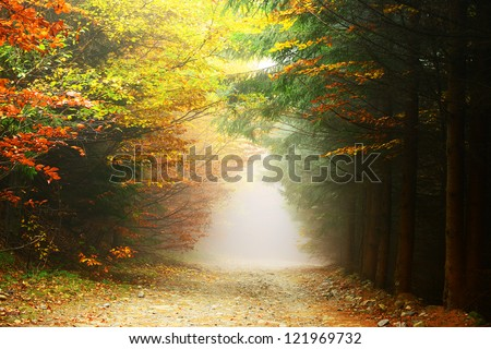 Forest autumn colors - stock photo