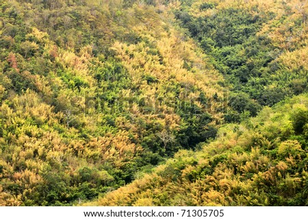 Forest background - stock photo