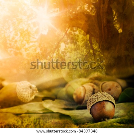 Forest background.  Autumn border design with oak acorns and bokeh lights. - stock photo