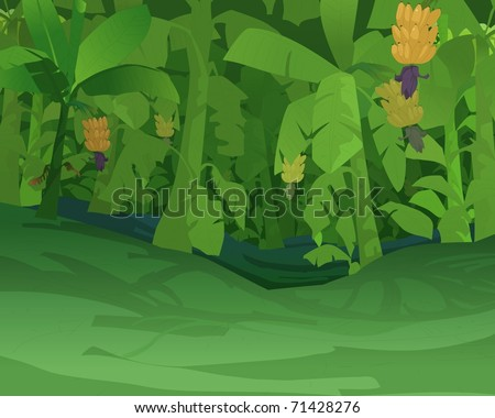 Forest background - Jungle View