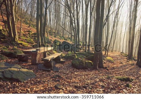 Forest Bench with Light Rays