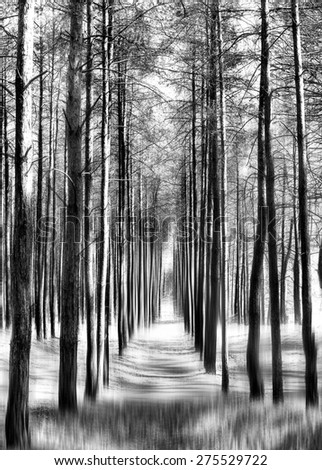 Forest, black and white abstraction - stock photo