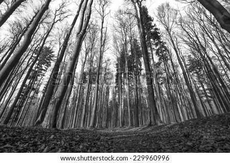 forest - black and white photography - stock photo