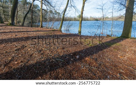 Forest bottom with sticks, leaves and pine cones and also the sahdows of trees at the edge of a natural pond in a nature reserve in Belgium. - stock photo