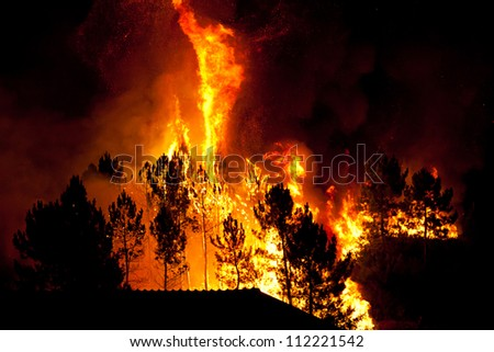 Forest burns close to houses - stock photo