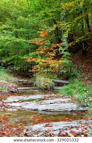 Forest by the river at autumn. Leaves fallen on the water - stock photo