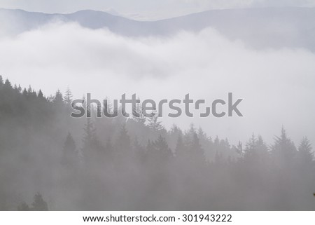 forest cairngorms national park Scotland - stock photo