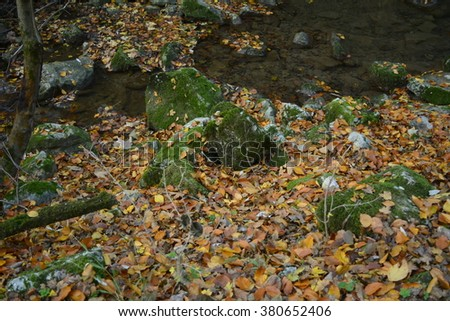 forest creek, autumn, fall - stock photo