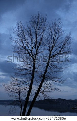 Forest Dark - stock photo