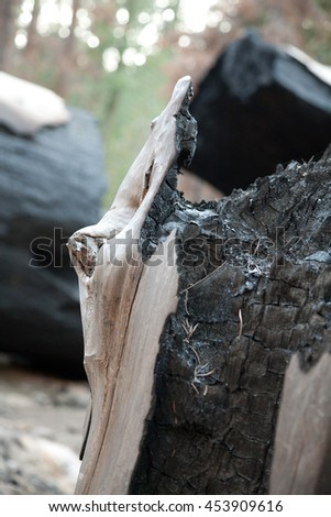 Forest detail shot of a partially burned tree years after a forest fire. - stock photo