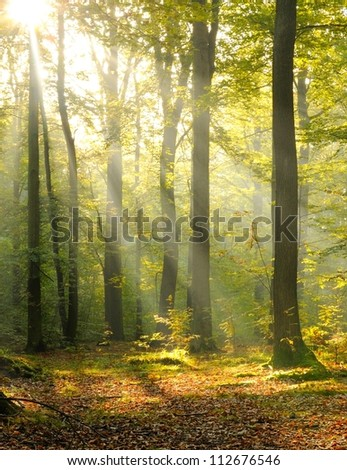 Forest dusk - stock photo