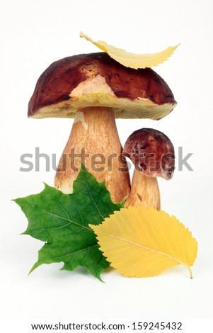 Forest edible mushrooms with autumn leaves on a white background - stock photo