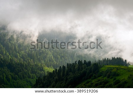 Forest. Fantastic mountain forest landscape in clouds. Evergreen foggy forest background in the dark mountain view. Misty and cloudy mountain forest.  Mountain forest in haze. - stock photo
