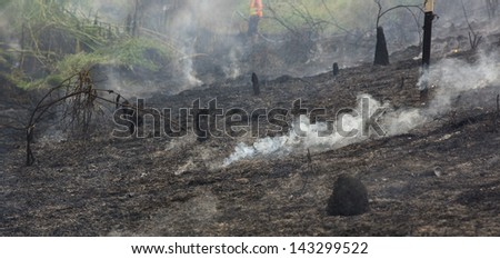 Forest fire. - stock photo