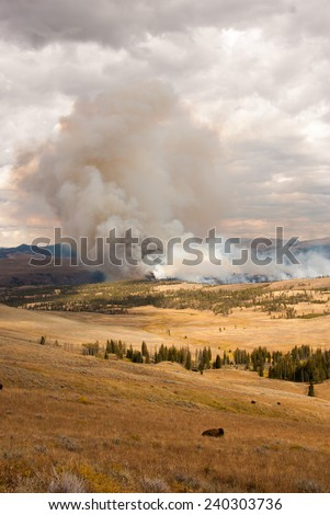 Forest fire in Yellowstone National Park, Wyoming USA - stock photo