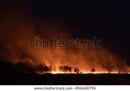 Forest fire. Pine forest on the hill is lit at night.