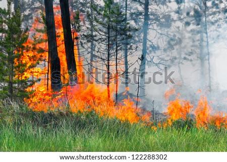 Forest fire, Russia, Siberia - stock photo