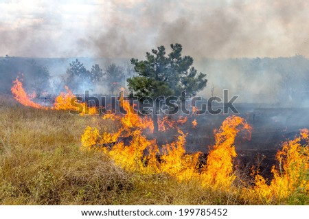 Forest fires and wind dry completely destroy the forest and steppe during a severe drought in southern Ukraine. The disaster brings regular damage to nature and the region's economy.  - stock photo