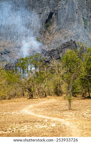 Forest fires in the daytime : flame, smoke, ash, trees and sky. - stock photo