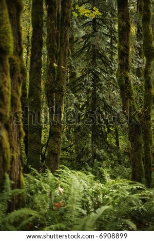 Forest floor and ferns - in a peaceful forested woodlands in the Pacific Northwest along a relaxing hiking trail