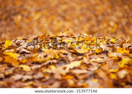 Forest floor covered in autumn leaves - stock photo
