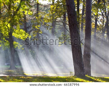 forest fog - stock photo