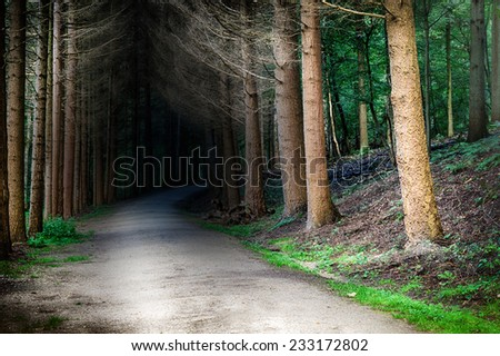 Forest footpath at sunset - stock photo
