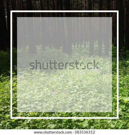 Forest frame. Green path and trees - stock photo