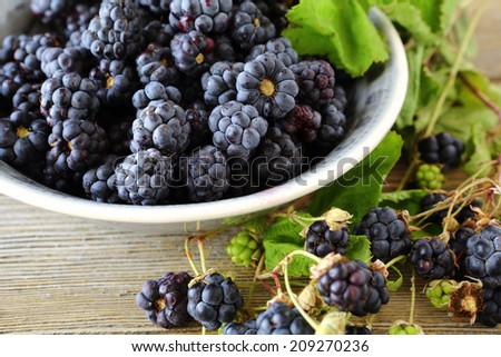 forest fresh blackberries in a bowl food closeup