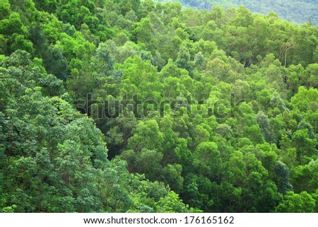 Forest from top view