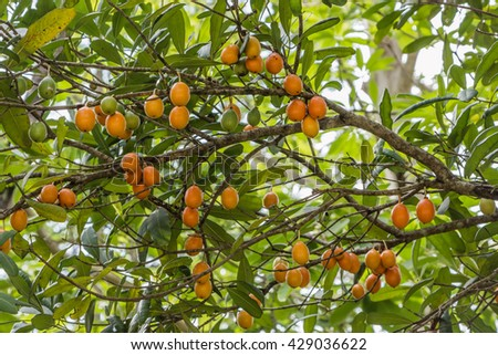 Forest fruit is a fruit that occurs naturally in the wild. Both edible and inedible. A variety of wildlife. Increase the fertility of the forests. - stock photo