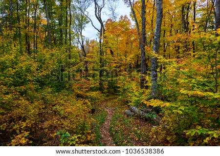 Forest hiking trail in Pictured Rocks National Lakeshore, 