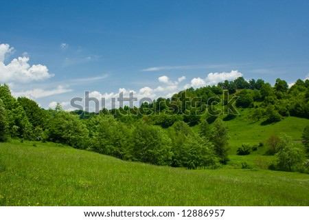 Forest in a sunny day with sky and white clouds - stock photo