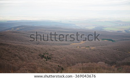 Forest in autumn with some yellow and green trees - stock photo