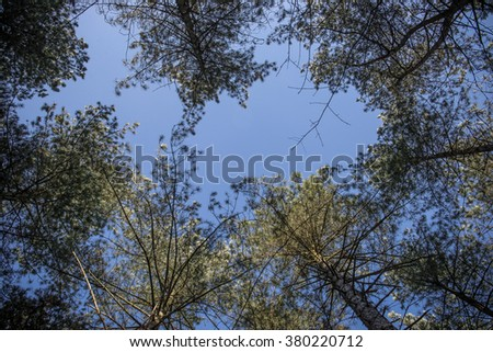 Forest in Belgium on a clear day - stock photo