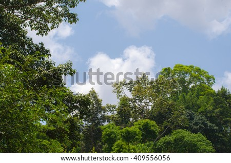 forest in blue sky