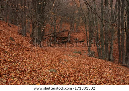 forest in Crimean mountains at fall