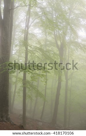 Forest in early spring with fog