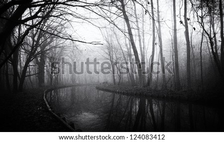 forest in fog - stock photo