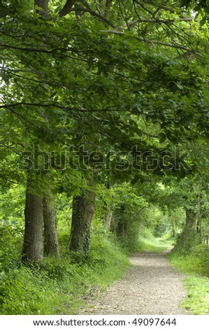 forest in summer