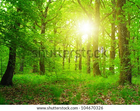 Forest in sunrise - stock photo
