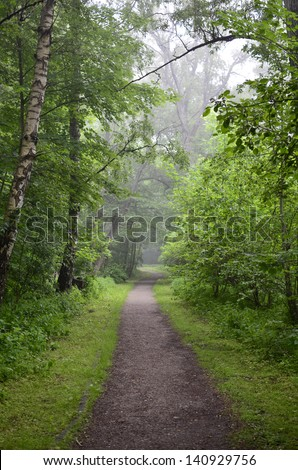 Forest in The Mist With Old Dirt Path. - stock photo