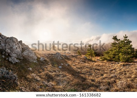 Forest in the mountains covered with clouds, landscape - stock photo